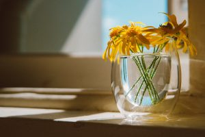 flora-flowers-glass-2241513