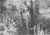 Jack carrying timber