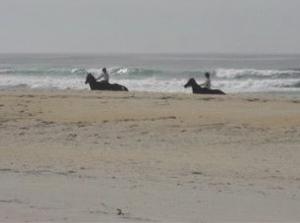 Horses being exercised on Ocean View beach