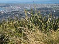 Dunedin from Flagstaff