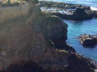 Birds & seals on 'island'