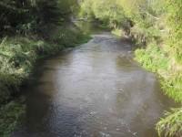 Waitati Stream