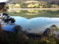 Mopanui Reflection