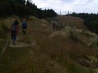 Along the pole line (Helen pic)