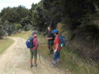 Down the pole line to the hut (Heb pic and caption)
