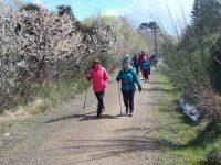 C.5) cherry blossom hikec